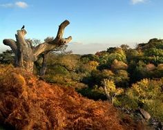Autumn Oaks  Smart use by Photographer Linsey   of wildlife to capture the scale of this beautiful landscape.   #autumn #bradgatepark #livingdead @lin_dies