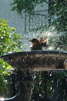 Birdbath in Motion