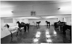 In January 1967 Kounellis organized a solo exhibition in Rome at L'Attico, directed by Fabio Sargentini, where he exhibited twelve live horses. Description from free-parking.tumblr.com. I searched for this on bing.com/images