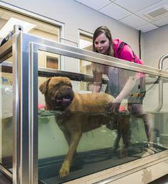 Hydrotherapy - 2013 Veterinary Hospital of the Year: Allandale Veterinary Hospital, Ontario, Canada