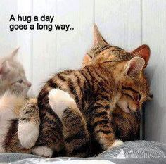Share a hug! It's #FREE + You never know - it could make someone's day!    #FREEHUG #RePin