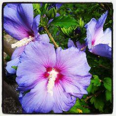 purple Purple, Plants, Plant, Viola, Planets