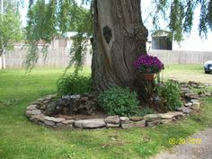 We built this small wall around our ancient willow tree out of found rock, and a jeep load from a friend who had torn out a flower bed.