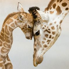 15 Adorable Moments in Animal Parenting
