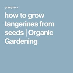how to grow tangerines from seeds | Organic Gardening