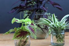 grow-indoor-plants-in-glass-bottles-apieceofrainbow (16)