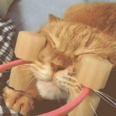 Shopping2do Facial Cat Massager