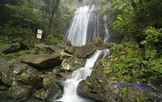 "El Yunque National Rainforest, Sierra de Luquillo, Rio Grande, PR  I went here on a field trip when i was 12 years old. I had to beg my father to let me go. It was worth all the ""PLEZ papi let me go"". lol"