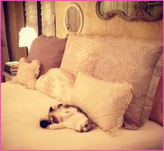 Taylor Swift's Cat Meredith Greets Her At Home