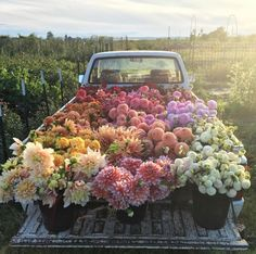 This bunch of flowers on a truck is the perfect floral inspiration. Bunch Of Flowers, Pretty Flowers, Fresh Flowers, Prettiest Flowers, Potted Flowers, Images Of Flowers, Field Of Flowers, Pink Flowers, Flower Colors