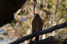 On the watch by Daniel Esquivel - Local bird taking care of her nest