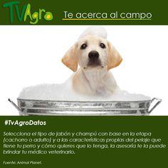 #TvAgroDatos Nuestras mascotas requieren de cuidados, y éstos dependen de la etapa en que se encuentren.