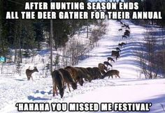 After deer hunting season ended-all the deer gathered for their annual ha-ha you missed me deer festival! So true. I see tons every year before deer season starts then they disappear until after deer season is over. Deer Hunting Humor, Hunting Jokes, Deer Hunting Season, Bow Hunting, Funny Hunting Pics, Hunting Crafts, Deer Camp, Hunting Art, Deer Hunting Blinds