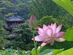 ¿Conoces el budismo? Su práctica podría interesarte. Comparte con nosotros.