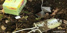 Δείτε τι Θαύματα μπορεί να κάνει στον Κήπο Σας ένα Φακελάκι Τσάι Herbs, Garden, Nature, Flowers, Garten, Naturaleza, Lawn And Garden, Herb, Gardens