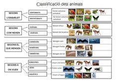 TERRESTRES: Classificació dels animals Animal Projects, Childcare, Writing, Math, History, School, Nature, Blog, Google