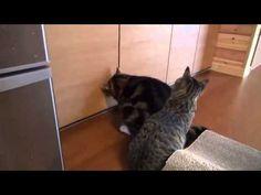 """Как два дружных котэ шкаф с едой взламывали...или как толстый котэ худого """"кинул"""" - YouTube"""