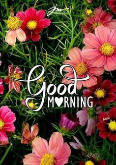 Good Morning Flowers Gif, Morning Images, Beautiful Places, Coffee, Friends, Nature, Plants, Good Morning Wishes, Gud Morning Images
