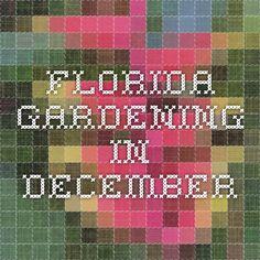 Florida Gardening in December