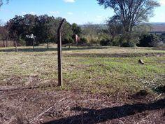 Fazenda / Sítio à Venda por R$ 205.000 PR-317, 8 , Maringá, PR, Foto 0