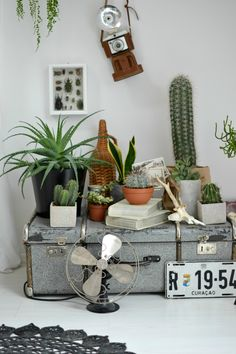 Es ist wieder Zeit für den monatlichen Urban Jungle Bloggers Beitrag. Diesmal geht es um Pflanzen in Kombination mit Glas. Dieser Trend ...