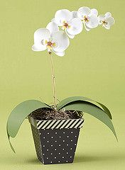 Orchid #cutfiles from #paperceafts&scrapbooking