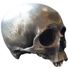 Silver Half Skull    20th Century  Vintage silver patina over bronze cast of a human skull with amazing detail.