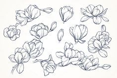 Flower Drawing Linear vector magnolia flowers set by Color and Decor on Cactus Drawing, Floral Drawing, Plant Drawing, Drawing Drawing, Flower Design Drawing, Drawing Ideas, Drawing Flowers, Flowers Illustration, Illustration Blume