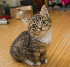 What a sweet look on this kitten's face!