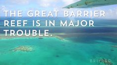 The Great Barrier Reef is in major trouble.