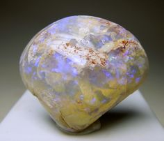 Opalized Fossil Clam