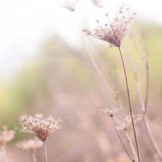 Qué bien sientan los paseos y el relax después de la semana intensa que hemos pasado  #fallishere #naturaleza #landscapes #girona #countryside #nature #walks #relax #ilovefall #ouiclementine