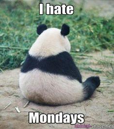 I hate Mondays! - http://www.dravenstales.ch/i-hate-mondays-14/