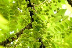 Dabur Chyawanprash – the nectar of eternal youth