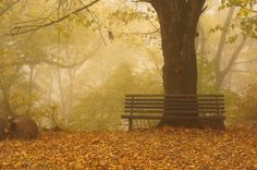 Photograph Foggy park and bench by Anna Bogush on 500px