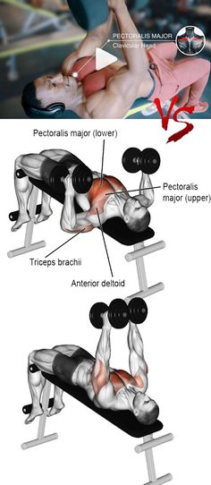 Dumbbell hammer press Source by weighteasyloss Chest Workouts, Gym Workouts, Strength Training For Beginners, Mental Training, Strength Training Workouts, Shoulder Workout, Fat Burning Workout, Muscle Fitness, Body Fitness