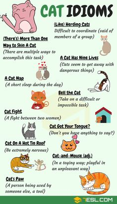 CAT Idioms: 30 Useful Cat Idioms & Sayings in English - 7 E S L Cat Idioms & Cat Sayings! Learn common cat idioms, phrases and sayings in English with meaning, ESL printable worksheets and example sentences. English Writing Skills, Learn English Grammar, English Vocabulary Words, Learn English Words, English Phrases, English Fun, English Language Learning, English Study, English Lessons