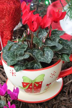 Cyclamen with Christmas Cup & Saucer Christmas Cup, Great Christmas Gifts, Great Gifts, Cup And Saucer, Planter Pots, Deck, Gift Ideas, Make It Yourself, Flowers