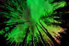Looking up, aurora borealis.