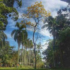 Jardim Botanico, Sao Paulo.