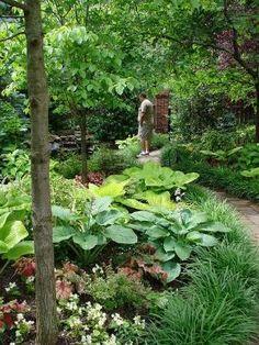 Shade garden by Corny