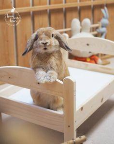 Stunning rabbit #rabbits
