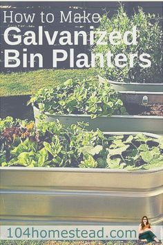 Galvanized bins make handy planters and they are pretty cool looking too. Best…