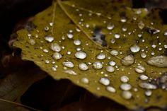 Fall by Adam Dorn