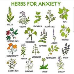 Tremendous Herb Gardening The Many Good Things About It Ideas Gardening Herbs The Green Witch on Healing Herbs, Medicinal Plants, Holistic Healing, Natural Home Remedies, Herbal Remedies, Health Remedies, Wicca Herbs, Herbs For Anxiety, Anxiety Help