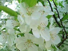 25  Zsoltár:  Szívemet hozzád emelem Plants, Flora, Plant