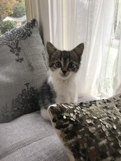 My sister rescued this kitten from a drain yesterday. Obviously we're calling her Pennywise. Penny for short. http://ift.tt/2iZzMAV