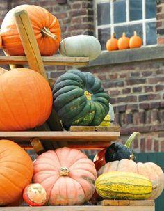 Pumpkin Vegetable, Bloom, Seasons, Vegetables, Fall Winter, Seasons Of The Year, Vegetable Recipes, Veggies
