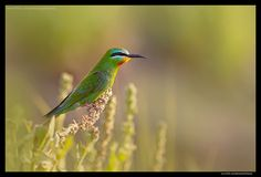 Beauty of The Nature by Muhammad Asif Sherazi on 500px