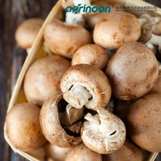 Mushroom Calories - Less Than Water? Reddit Food, Growing Mushrooms At Home, How To Control Sugar, Mushroom Benefits, Lower Blood Sugar Naturally, Cancer Fighting Foods, No Sugar Foods, Healthy Soup Recipes, Healthy Eating